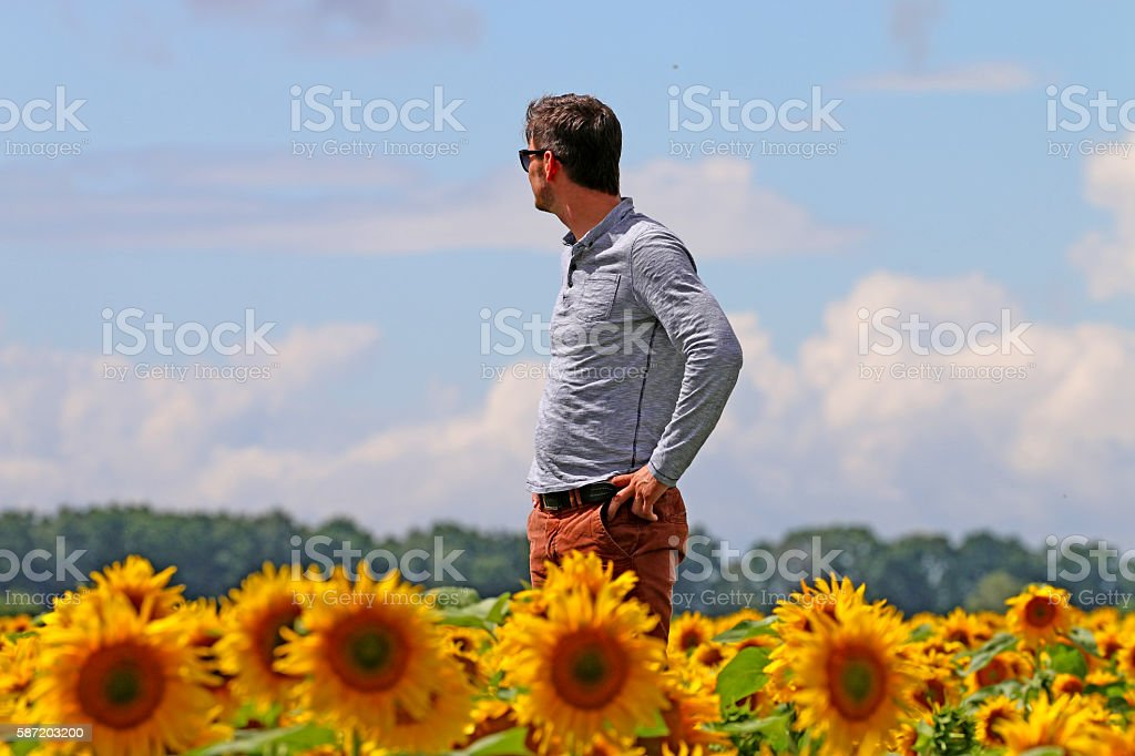 man in the field of sunflowers, in view distance stock photo