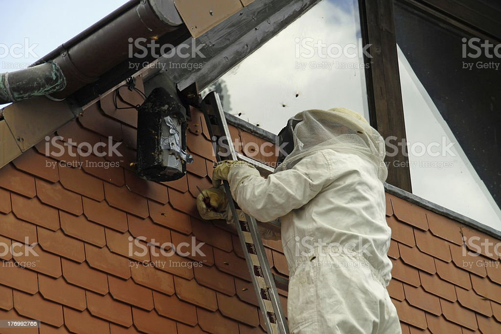 Man in the suit settled by hornets stock photo