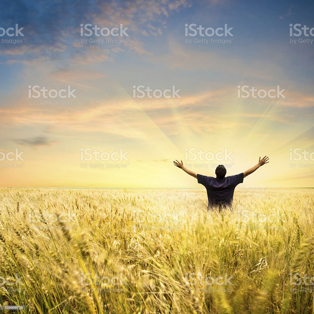 man in wheat field royalty-free stock photo
