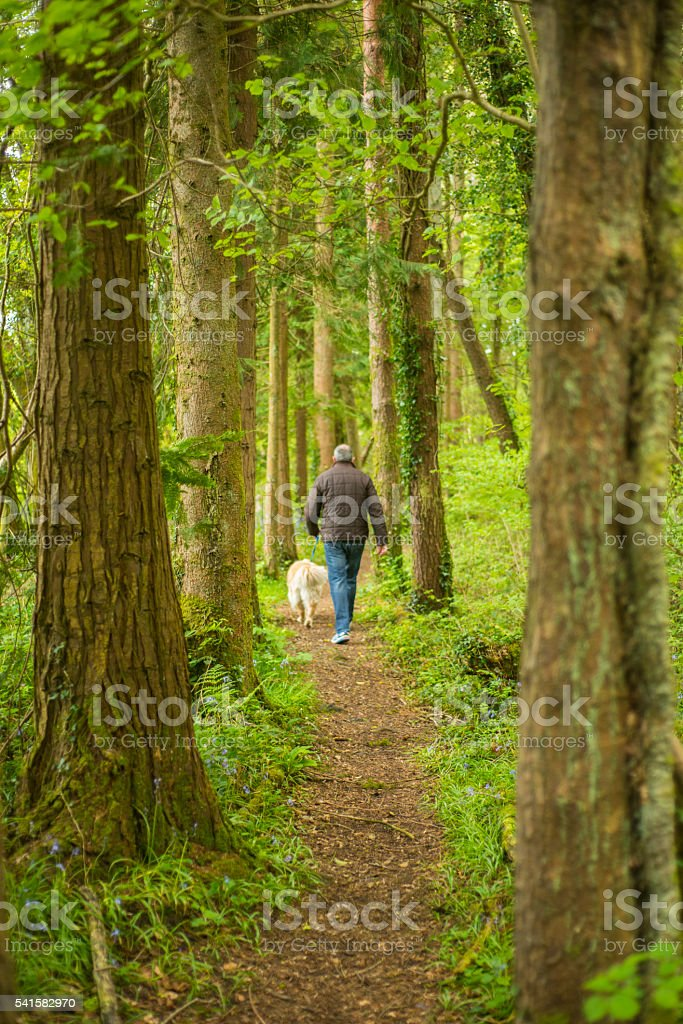 Man in woods walking with his dogs stock photo