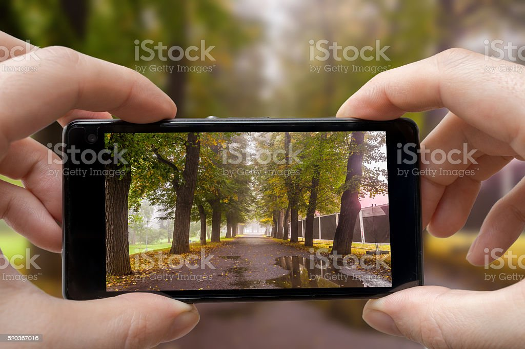 Man is photographing trees in park in autumn with smartphone. stock photo