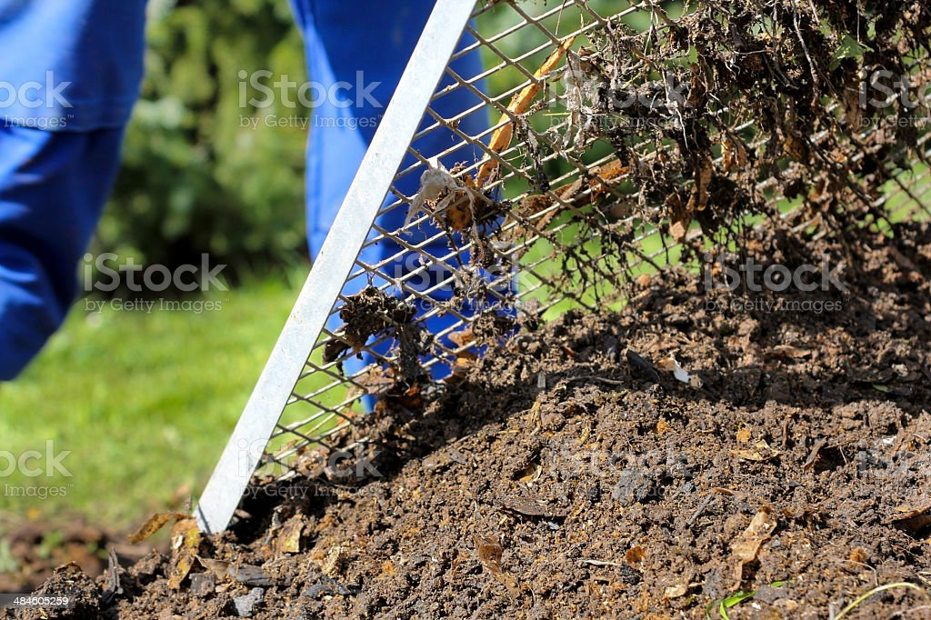 Man is sieving the composted earth stock photo
