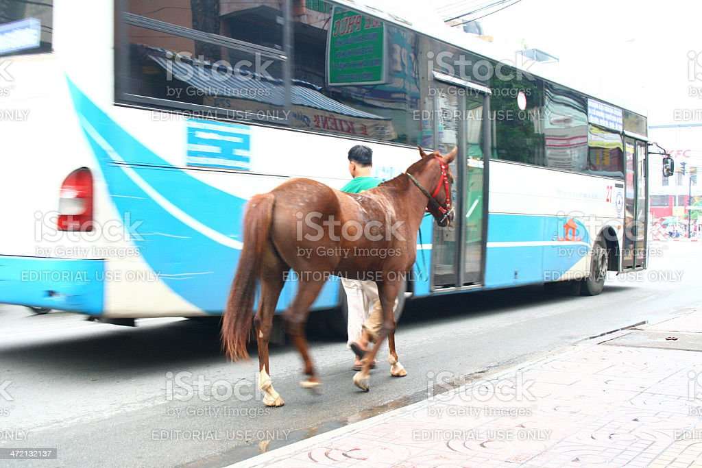 Man leading horse next to passing bus stock photo