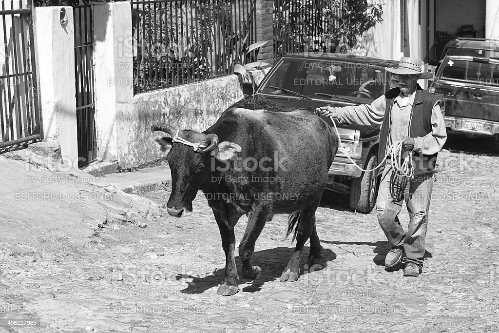 Man Leading Steer Up Cobblestone Street, San Sebastian, Mexico stock photo
