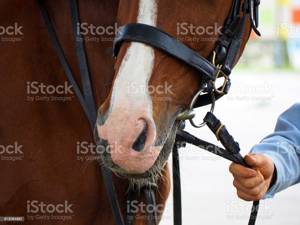 Man leads his horse by the reins. stock photo