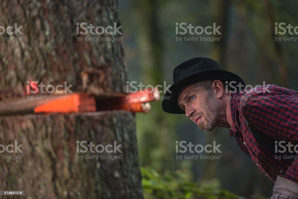 Man looking at tree trunk stock photo