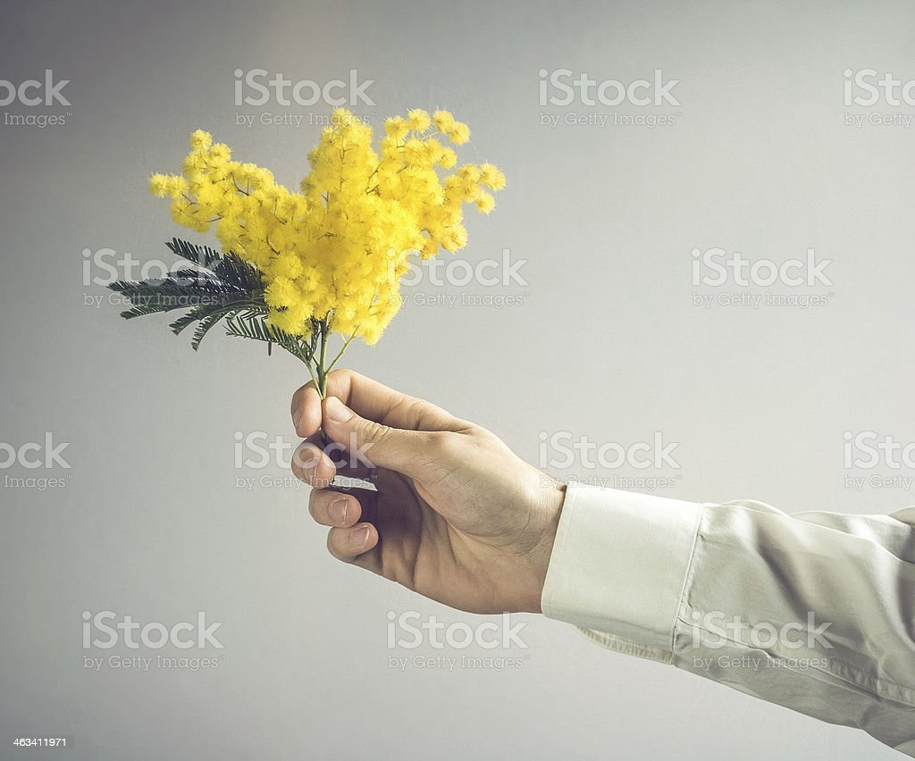 Man Offering Mimosa for 8th March, Woman's Day stock photo