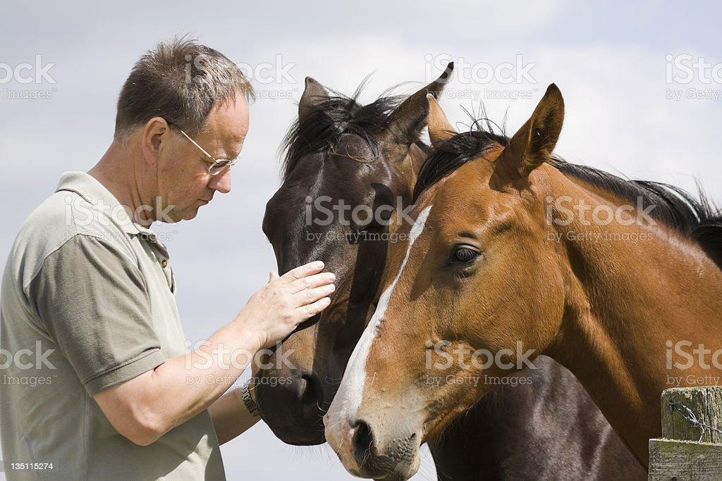 man petting horses royalty-free stock photo