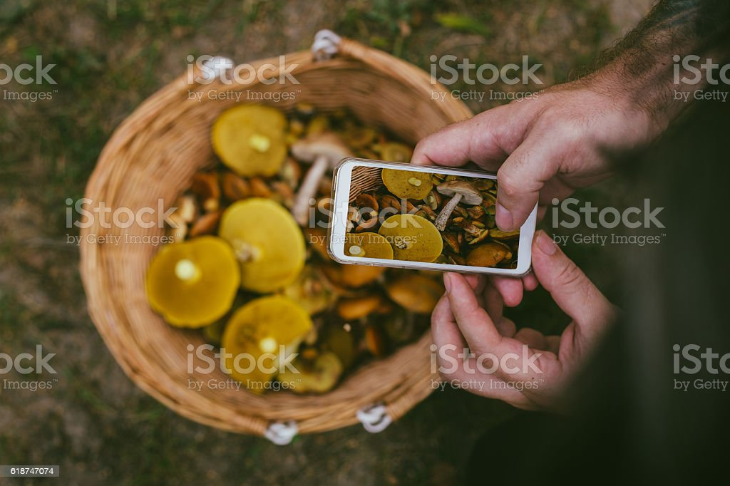 Man photographing basket of mushrooms with smart phone stock photo