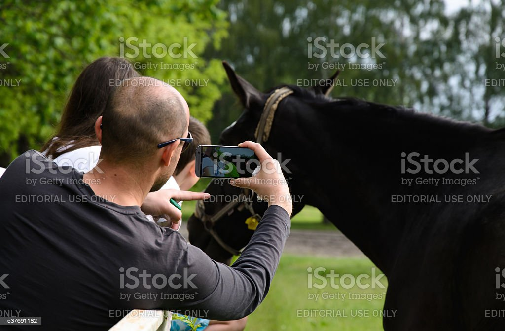 man photographs a horse phone camera stock photo
