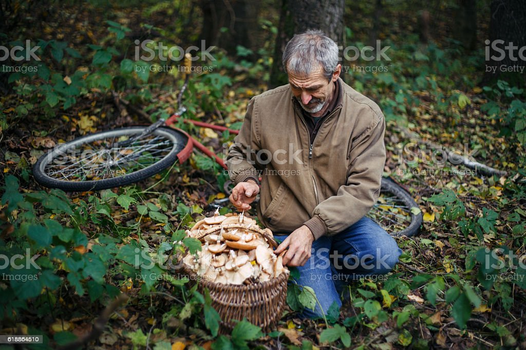 Man picking mushrooms stock photo