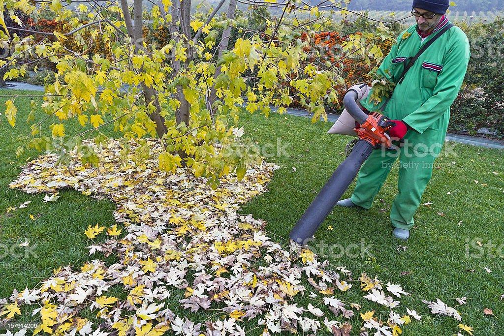Man picking up leaves stock photo
