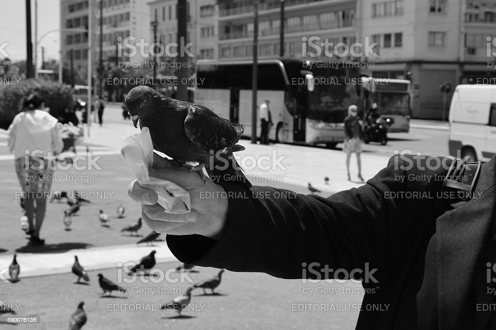 man pigeon syntagma square stock photo