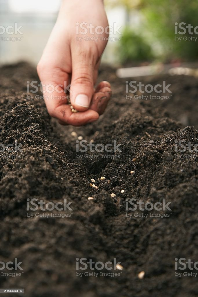 Man placing seeds on dirt stock photo