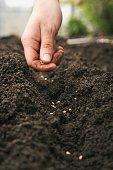 Man placing seeds on dirt