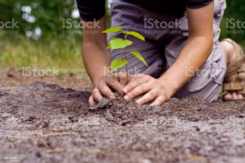 Man planted a new tree stock photo