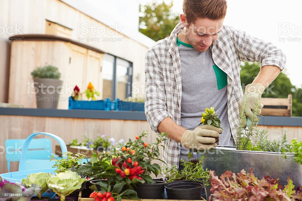 Man Planting Container On Rooftop Garden stock photo