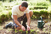 Man Planting Seedling In Ground On Allotment