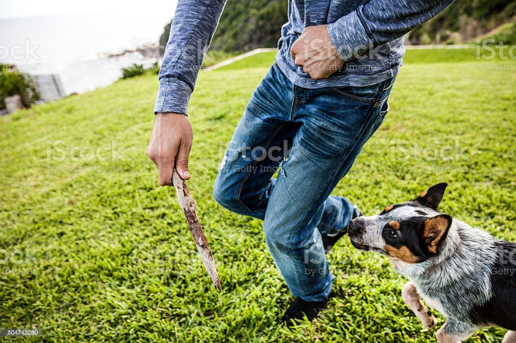 Man playing with dog in the backyard in Australia stock photo