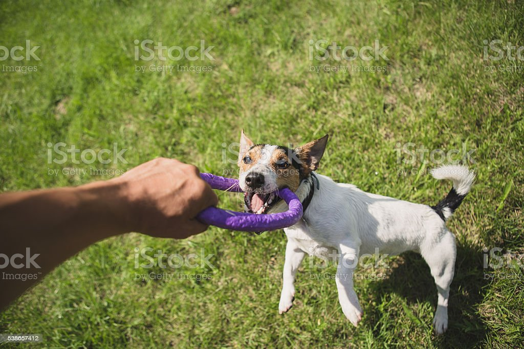 man plays with a little dog on the grass stock photo