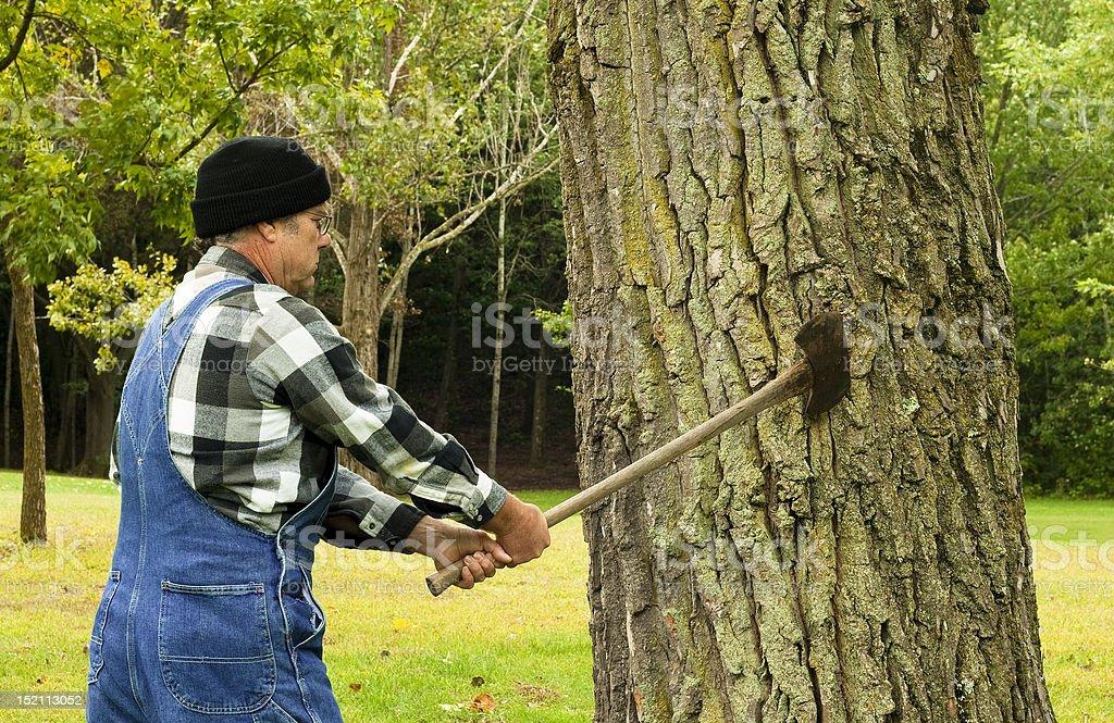 man preparing to chop down tree royalty-free stock photo