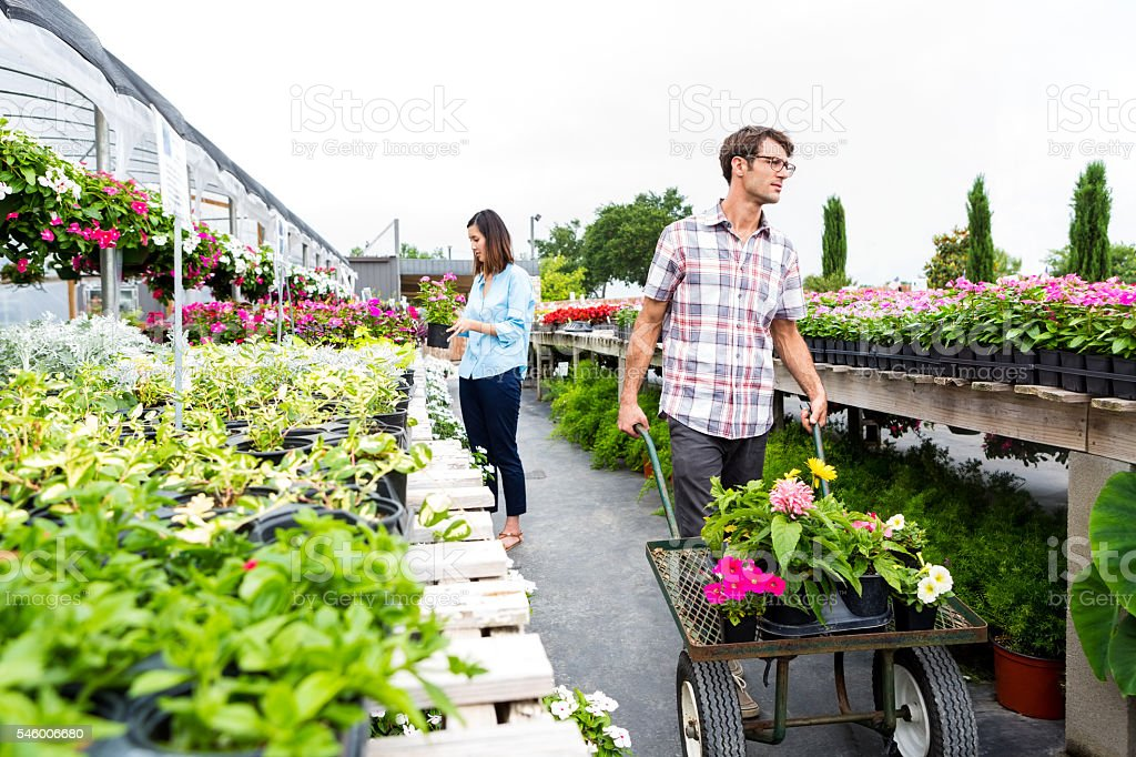 Man pushes cart full of flowers in nursery stock photo