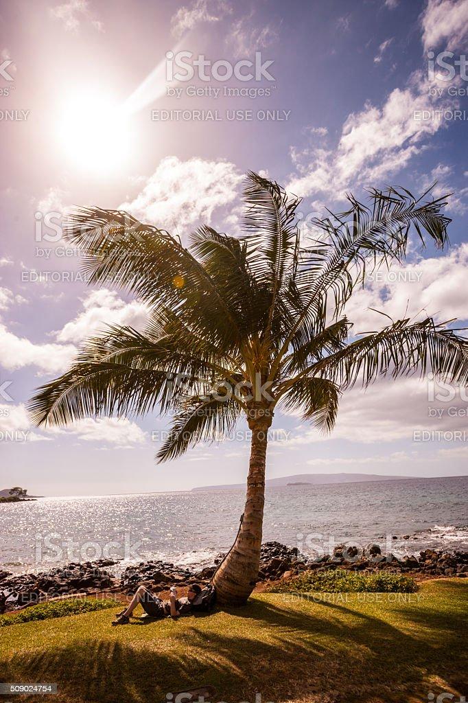 Man reading book under palm tree, Wailea, Hawaii, USA stock photo