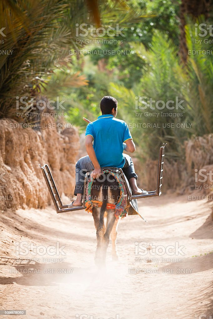 man riding on a donkey stock photo
