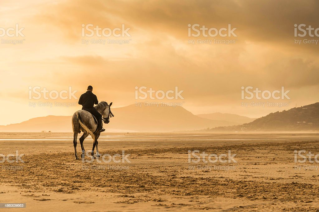 Man riding white horse stock photo