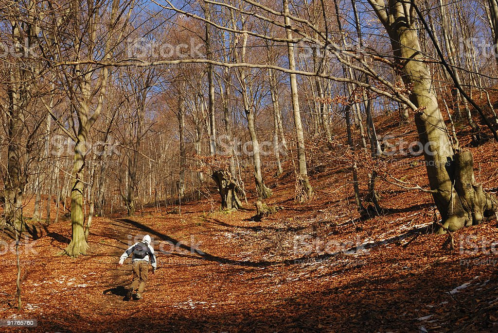 Man running in the forest royalty-free stock photo