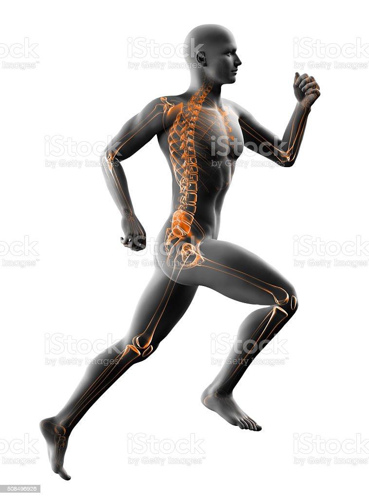 man running x-ray isolated on white stock photo