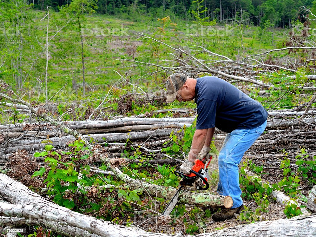Man sawing firewood stock photo