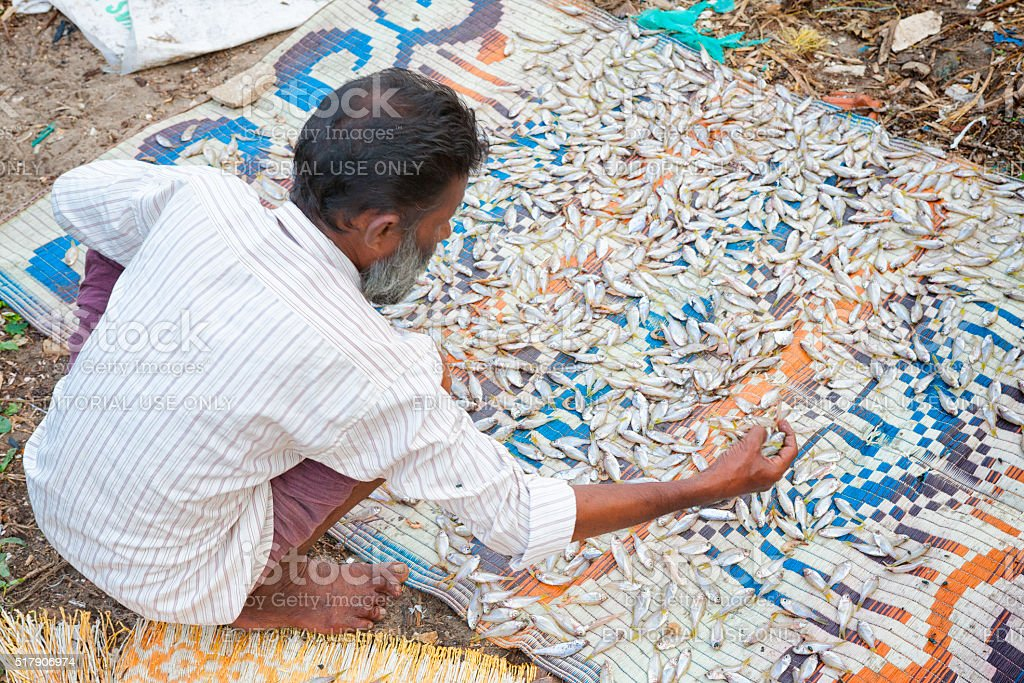 Man setting fish out to dry in Kochi, India stock photo