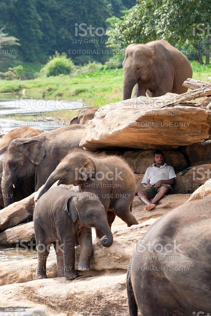 Man sits under rock watching elephants stock photo