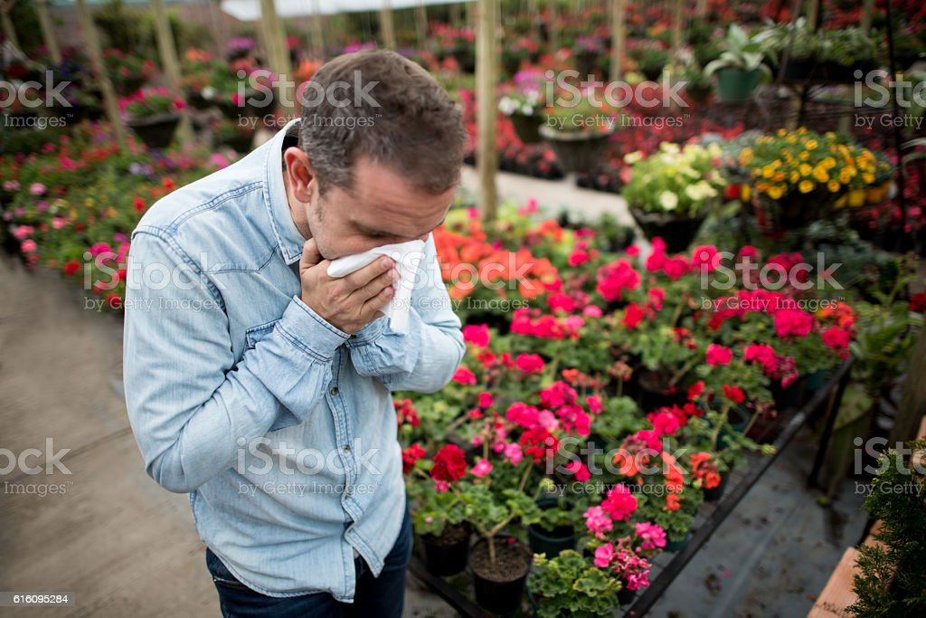 Man sneezing at a greenhouse stock photo