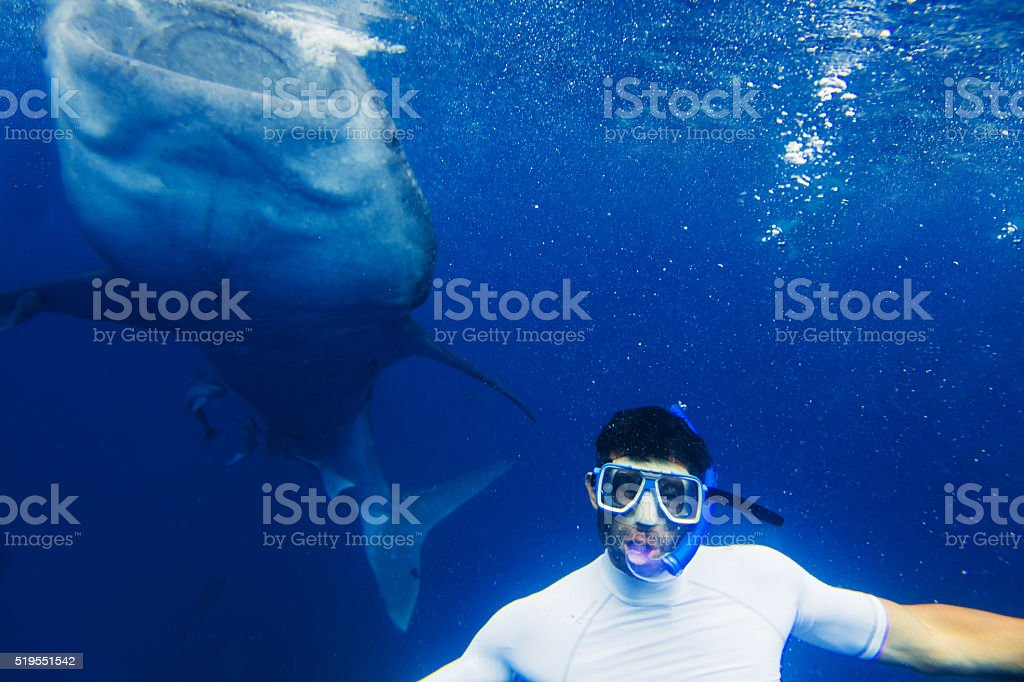 Man snorkeling with whale shark stock photo