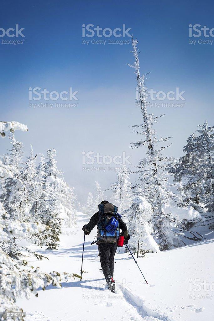 Man Snowshoeing on Beautiful Winter Day stock photo