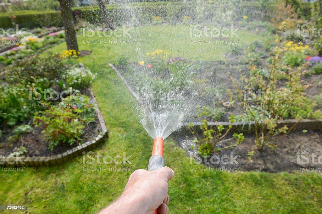 A man spraying his garden with a hose stock photo