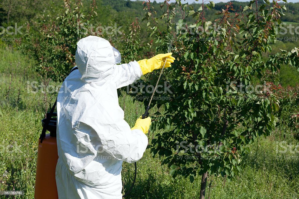Man spraying toxic pesticides or insecticides in fruit orchard stock photo