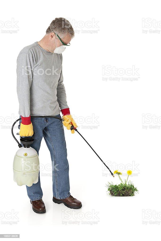 Man Spraying Weedkiller stock photo