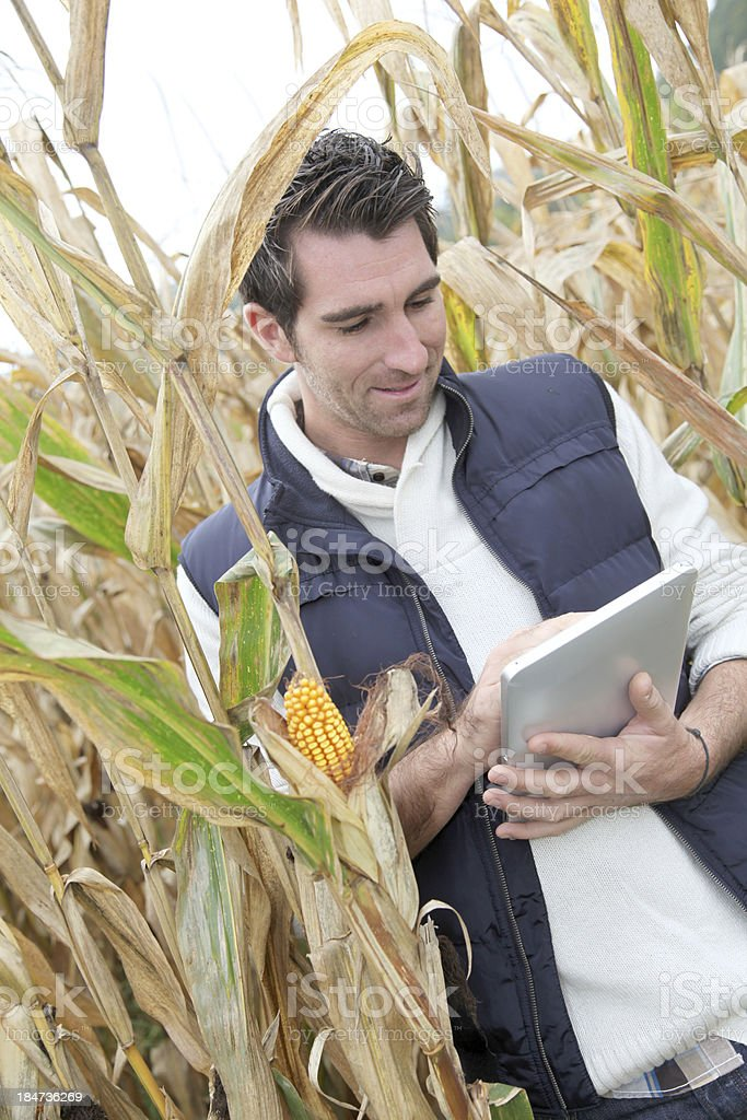 Man standing in middle of field corn with  digital tablet royalty-free stock photo