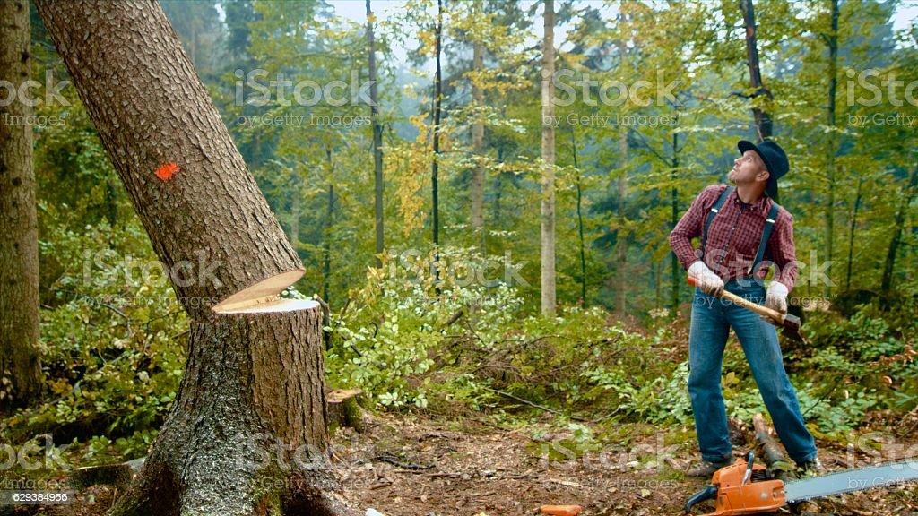 Man standing near falling tree stock photo