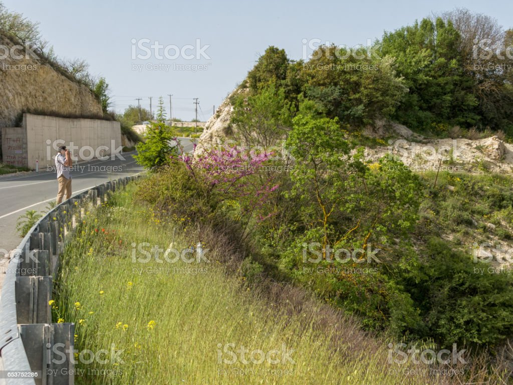 Man stands on serpentine road turn and shoots blossoming tree stock photo