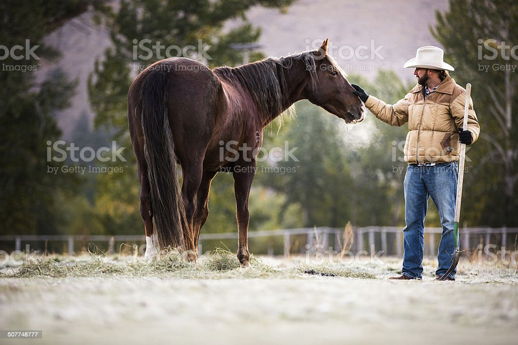 Man stops to pet horse standing in fenced pasture royalty-free stock photo