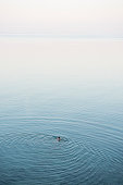Man taking an early morning swim on a tranquil sea