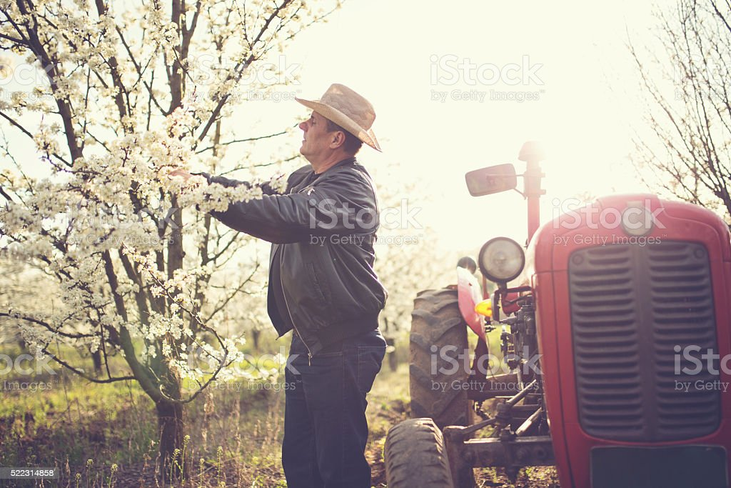 Man taking care of his orchard stock photo