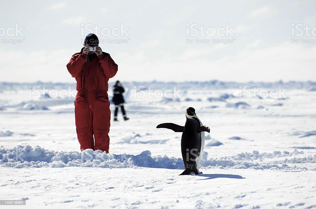 男性ペンギンの写真を承っております。 ロイヤリティフリーストックフォト