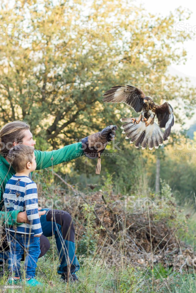 Man teaches boy the art of falconry stock photo