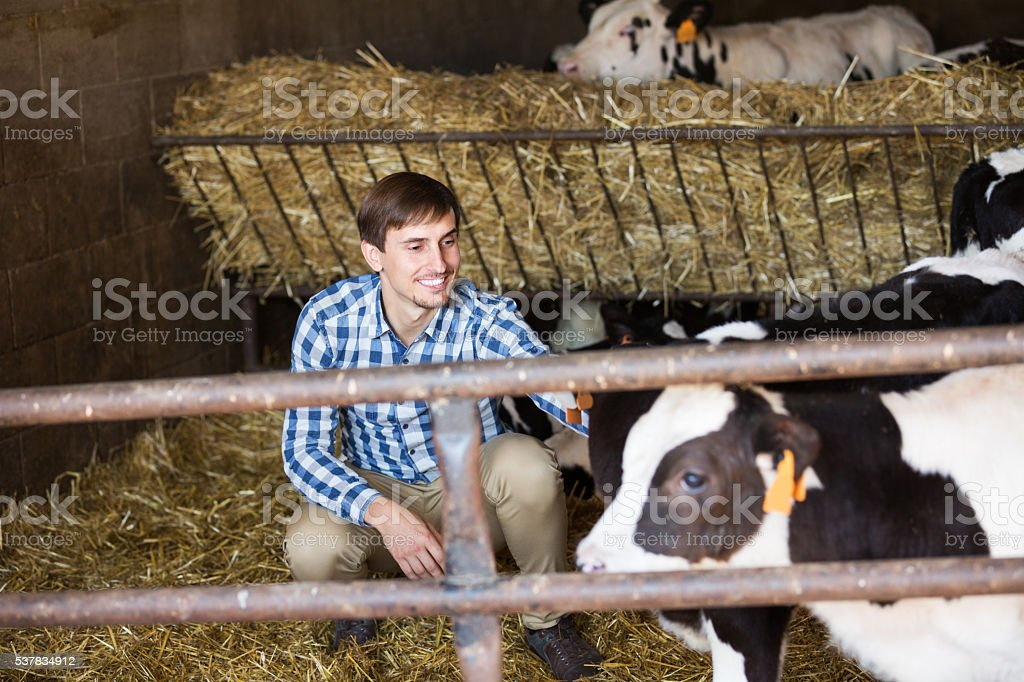 Man touching cows in cowshed stock photo