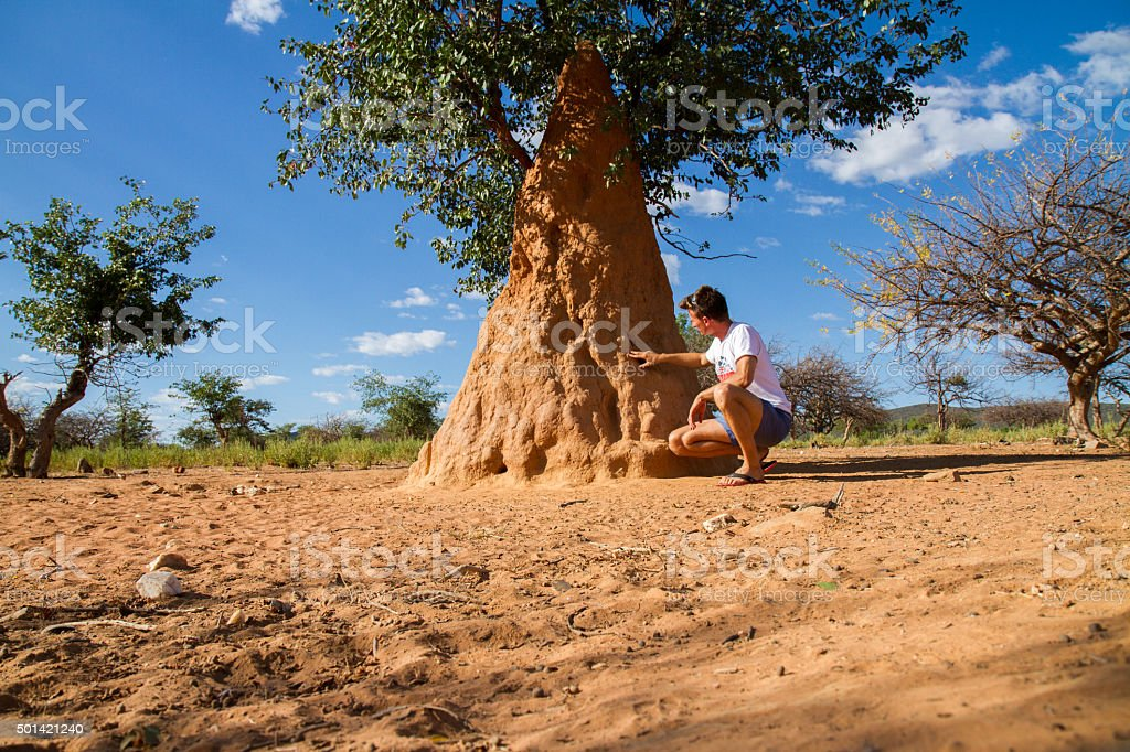 Man Touching Mound-Building Termite stock photo